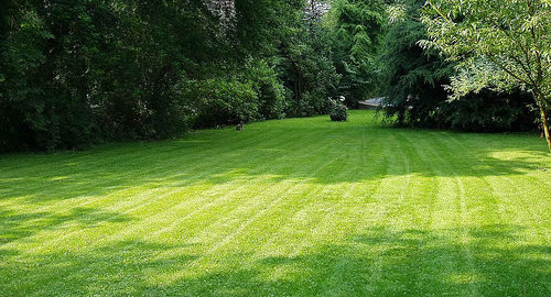 Mowing & Maintenance in Knoxville, TN